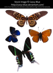 Butterflies and Moth Precut Pack 1 by Cassy-Blue