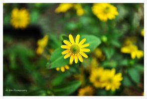 Tiny Little Yellow by erbphotography