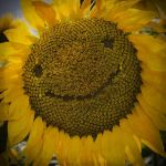 Smile by armene