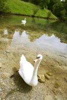 Swans from a faerie tale... by Euvanesiel