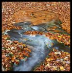 Leaves in the water by giacomoburattini