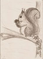 the squirrell by taluranit