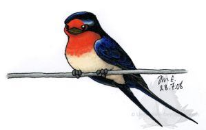 Barn Swallow by Lintufriikki
