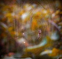 Spiderweb by Jooihi