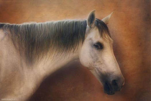 Painting Horse by Funtoon