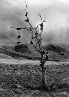 Shoe Tree Black And White by kathrynXIV