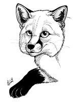 """Thank you"" Fox by twapa"