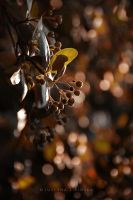 Fall is here by Justine1985