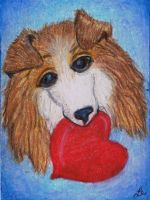 My Puppy Valentine - Collie II by clay-dreams