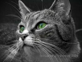 Green Eyed by LucieJirankova