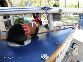 Pirate Costume for Rabbit 4 by Cillana