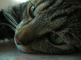 Close up kitty by CharmzPhotoz