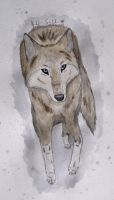 Watercolor Wolf by Peace-Wolf