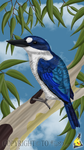 Forest Kingfisher by FlightDesigns