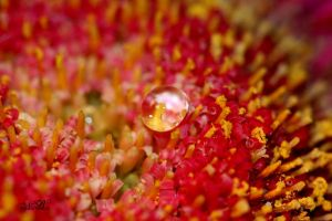 - Crowd Surfer - by Silver-Dew-Drop