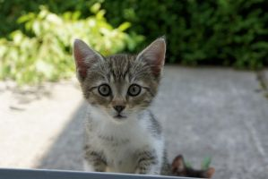 Kitten by thessias