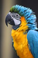 Macaw by SD-13