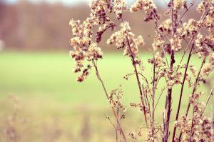 Some plants I by Himmelsfalter