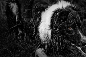 Charlie the Dog Two by dioxity