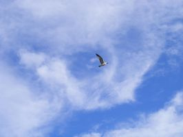 Seagull in the sky by sockypoo