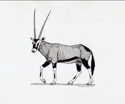 Gemsbok by MustangMadness8