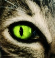 Cat eye by Tamile
