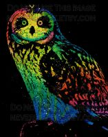 Owl Color Version by misscarissarose