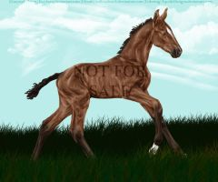 Bay Foal From Grayscale by EquideDesigns