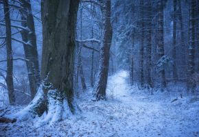 Winter dream by erynlasgalenphotoart