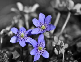 Flower by Aniceguy67