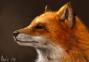 foxy by dr-kelso