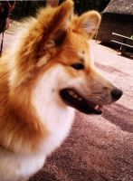 Dog Molle by TheMysticWolf