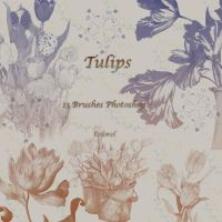 Tulips by libidules