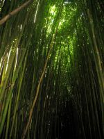 ++ lush+ bamboo by charmbuster