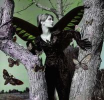Butterfly by ciclo