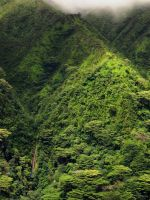 Manoa Falls by joeyartist