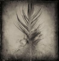 Night Feather... by ansdesign