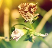 Madame butterfly by Alessia-Izzo