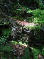 Waterfall in Miniature by mirengraphics