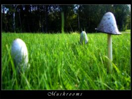 Mushrooms by Shaggy87