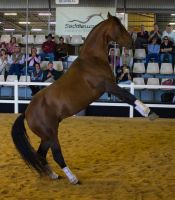 STOCK - 2014 Total Equine Expo-13 by fillyrox