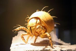 Giant Mite by Rea-the-squirrel