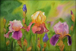 Irises by Shelter85