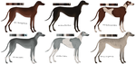Greyhound Adoptables // GONE by Serphire