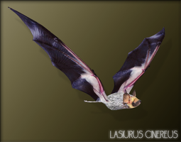 Hoary Bat by OkeanosSaviour