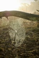 Spiderweb by Chiaralovestwilight