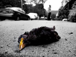 Dead Bird by sadistikid