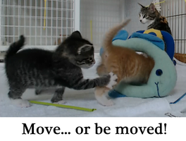 Move, or I'll move you myself! by venicet