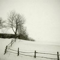Trees and Fences by Lost-in-a-day