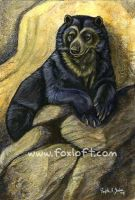 Spectacled Bear Mountain Watch by Foxfeather248